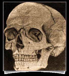 skull-blog