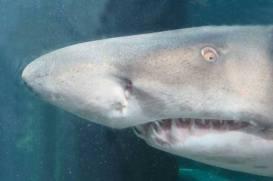 Became a Sole Mate aquarium member (Two Oceans, Cape Town)