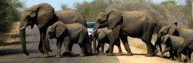 Went on safari in Kruger National Park